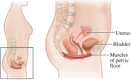 Physical Therapy For Pelvic Pain Also Known As Pelvic Floor Dysfunction